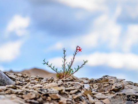 Algumas constatações sobre o Luto por Suicídio | Nomoblidis | Posvenção de Suicídio